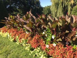 Red King Humbert cannas, coleus and snapdragon in Boston Common